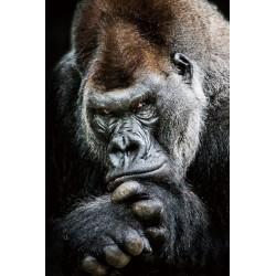 Tableau en verre Gorille